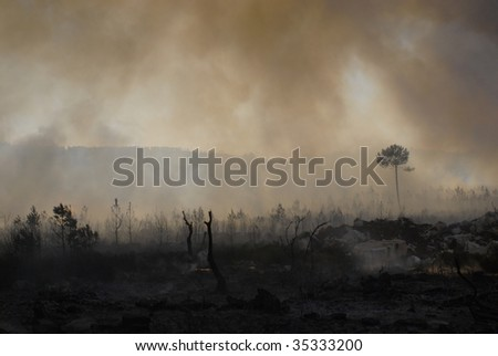 Fire and forest - stock photo