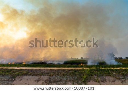 Fire and smoke in paddy - stock photo