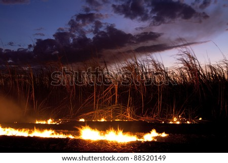 Fire at sugar cane field near Bunderberg Australia