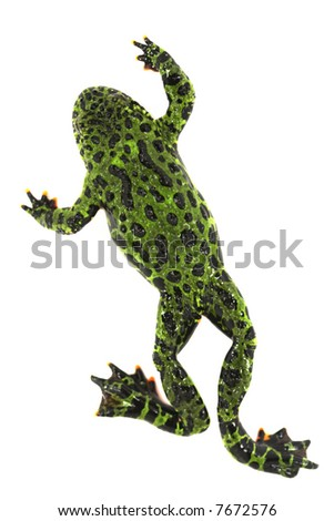 Fire bellied toad - stock photo