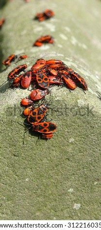 fire bugs - stock photo
