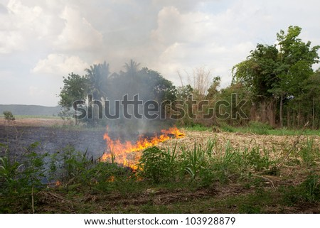 Fire burning dried sugarcane and grass field caused air pollution and global warming - stock photo