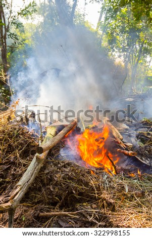 fire burning dry tree branches - stock photo