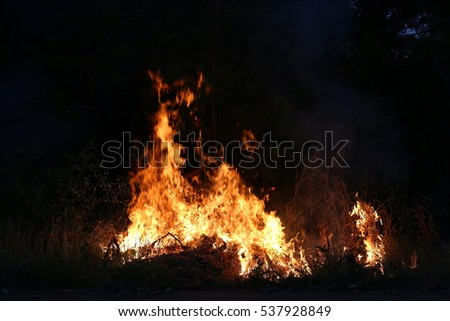 Fire flames burning grass on a black background