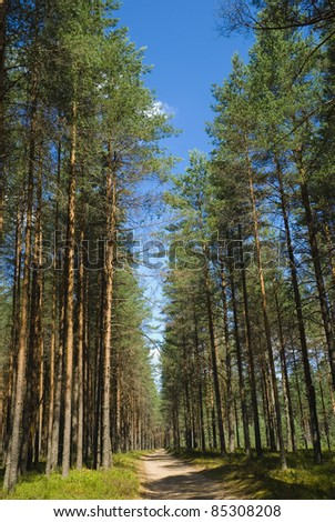 Fire glade and fire-prevention road to pine wood - stock photo