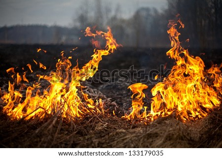 fire grass spring - stock photo