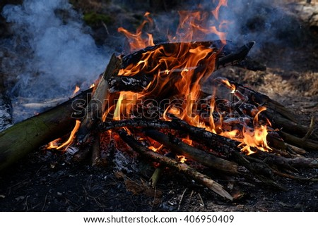 Fire in a wood. - stock photo