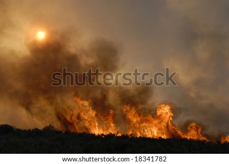 Fire in forests - sun hidden - destruction - europe