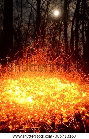 Fire in night forest