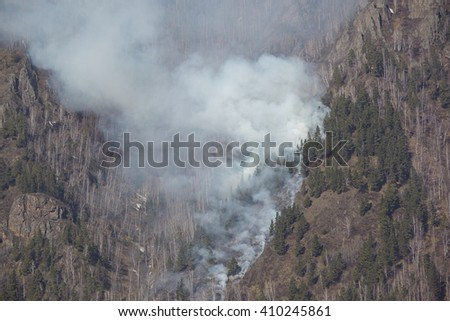 Fire in the forest - stock photo