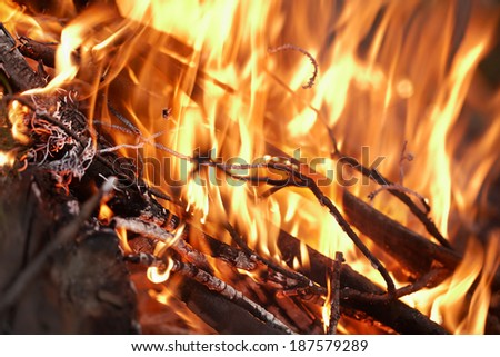 Fire in the forest / Dry branches burns in the fire. Close up - stock photo