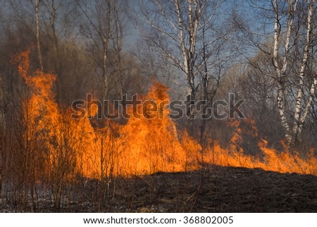 Fire in the forest, natural disaster