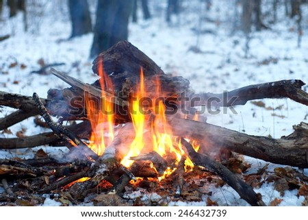 Fire In The Snowy Forest