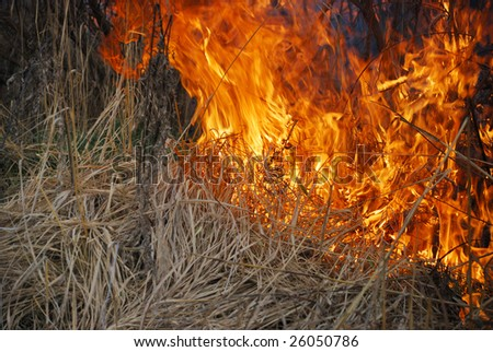 Fire is burning dry grass and bushes