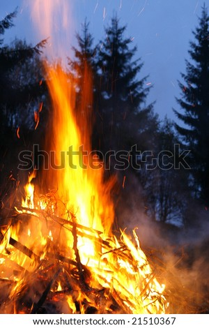 Fire is forest - stock photo