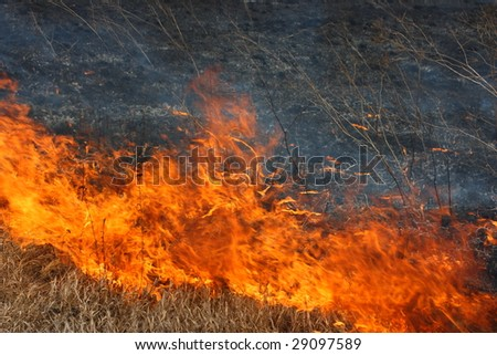 Fire line moving forwards - tongues of flame consuming dry grass