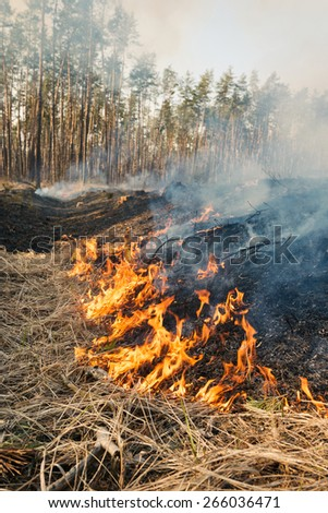 Fire on agricultural land near forest. Flame and burned area in smoke - stock photo