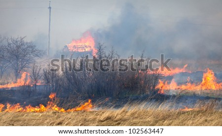 Fire on dry grass, trees and buildings inflated by a strong wind