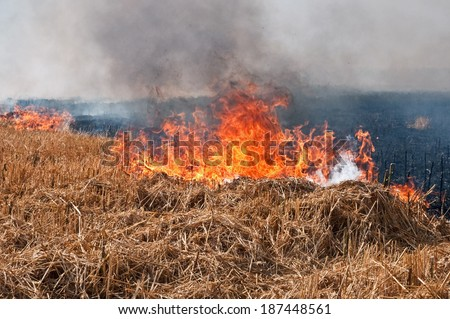 Fire on the field threatens housing - stock photo