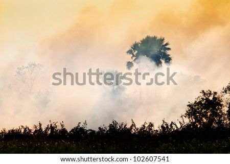 Fire pollution and smoke in farm - stock photo