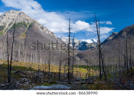 Fire ravaged forest in Kootenay National Park - stock photo