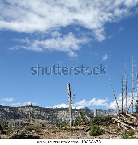 Fire ravaged section of forest between Devils Postpile and Rainbow Falls at Mammoth Mountain. - stock photo