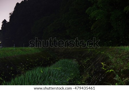 Fireflies fly Japan Country Landscapes