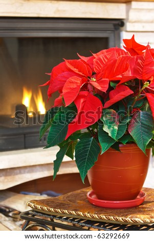 Fireplace and flower