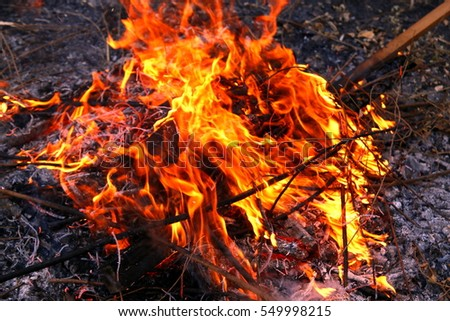 Firewood flames, pine nose leaves, flame background, at Kumakawa Shrine, Tokyo, Japan,