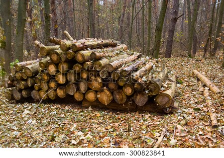 Firewood in the forest.  - stock photo