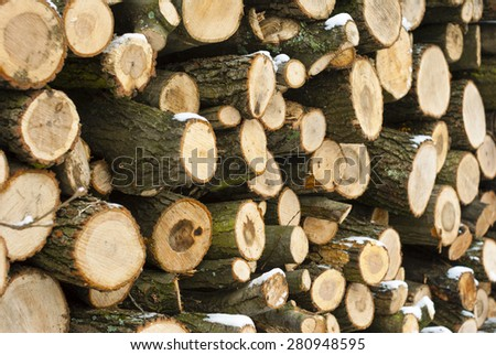 firewood stack in a forest at winter - stock photo