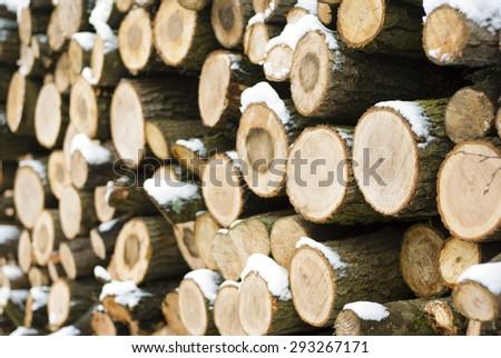 firewood stack in a forest at winter