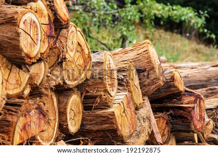 firewood stacked in a pile - stock photo