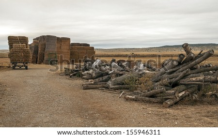 Firewood with cereal grains collected located in the Spanish province of Teruel, in a cloudy day - stock photo