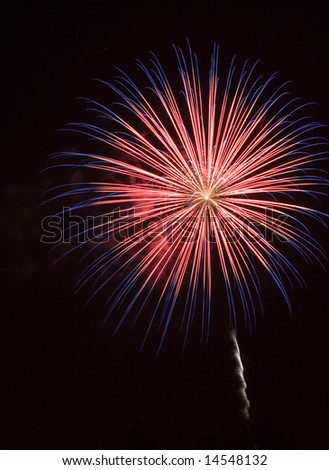 Firework Display - stock photo