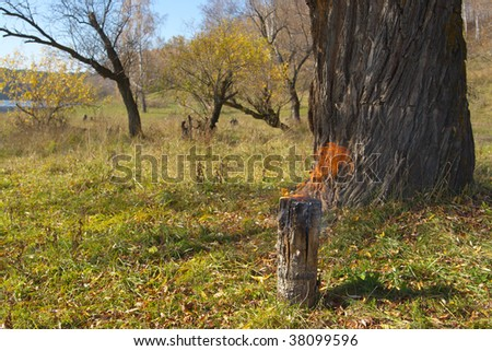 Firing billet under the big  tree - stock photo
