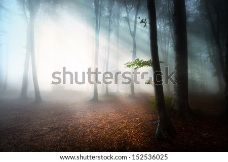 First autumn days into a foggy forest - stock photo