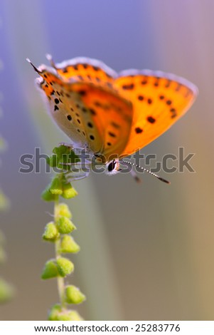 First butterfly in this year - stock photo