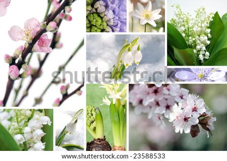 first flowers - stock photo