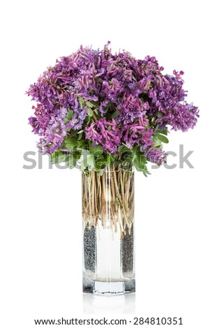 First forest springs flowers in vase,  isolated on white background - stock photo