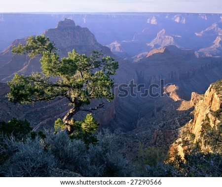 First Light Of Dawn At Grand Canyon National Park, Arizona, Cape Royal Overlook, North Rim - stock photo