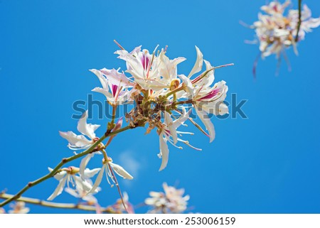 First pink flowers blossoming in spanish park - stock photo