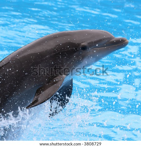 First plane of an acrobat dolphin jumping - stock photo