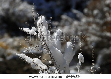 First snow - stock photo