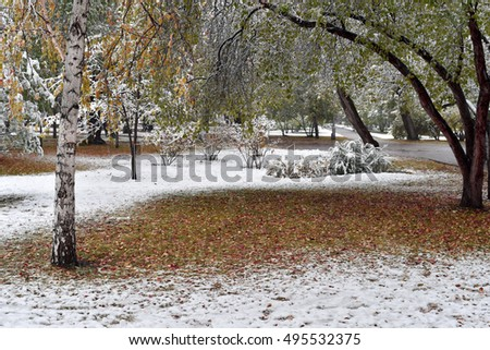 First snow in quiet city park