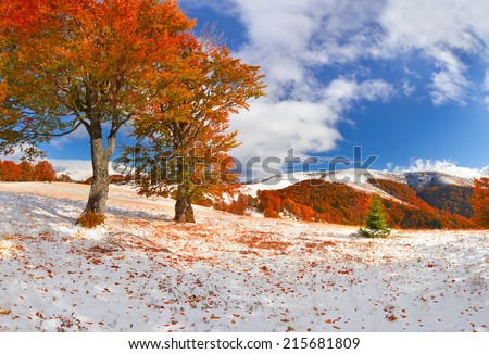 First snow in the autumn forest. Sunny November day - stock photo