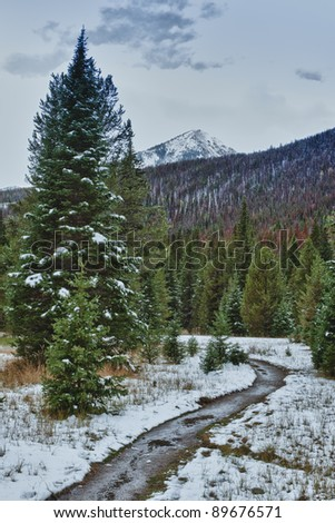 First snow in the Rocky mountains forest. Colorado, USA