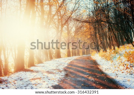 First Snow in the Woods in lisi.Doroha - stock photo