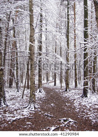 First snow. The path in winter forest