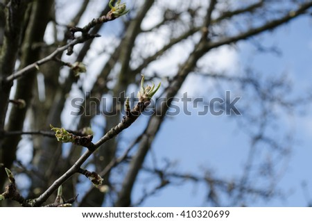 first spring buds on lilac bush / Spring bud macro view. Budding tree with   red young leaf / Unopened bud of magnolia flower / tree branch with buds background, spring - stock photo